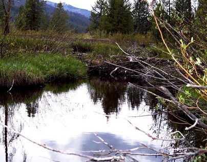 Beaver pond high in the mountains