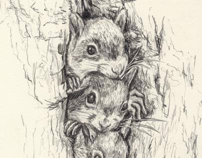 3 Squirrel Pups