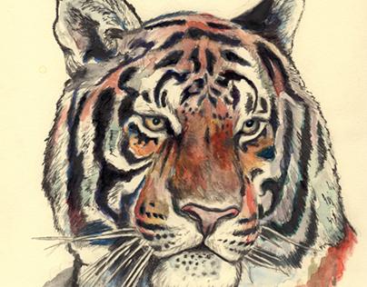Tiger Commission
