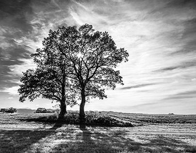Trees in bavarian autumn