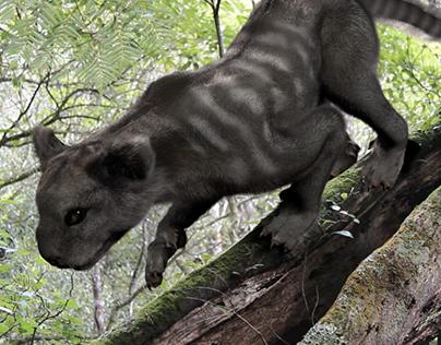 Mysteries of New Zealand: Thylacoline Zealandus