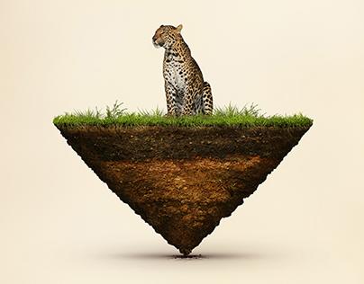 Balance of Nature / Equilíbrio da Natureza