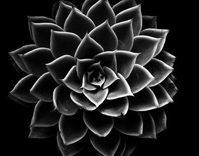 Succulent Photo Series
