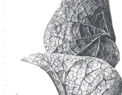Biomimicry Sketchbook Work