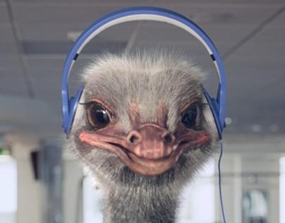 Ostrich animation