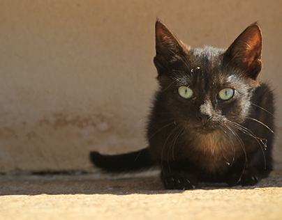 Photo - Street Cats of Greece