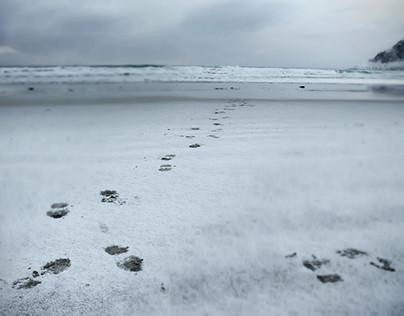 Beyond the Arctic Circle I