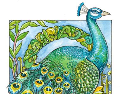 Peacock #2