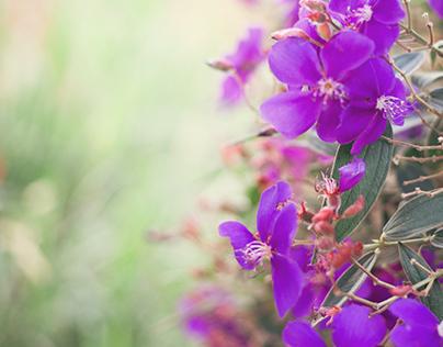 Orégano y lilas.
