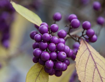 Blüt und fruchtet