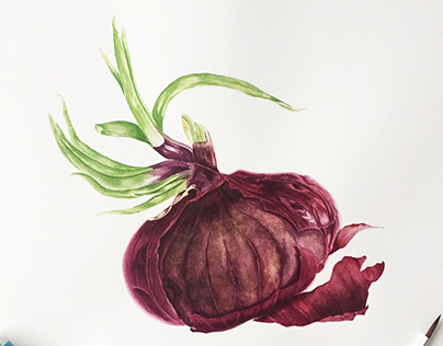 """Botanical watercolor """"Red onion"""""""