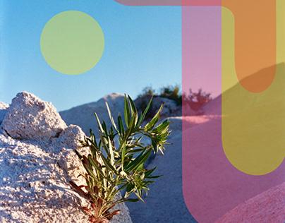 Manitoulin Desert