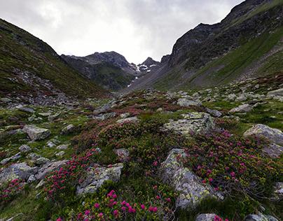 Dolomites XVI