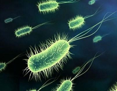 Masisa Microbios - Radio