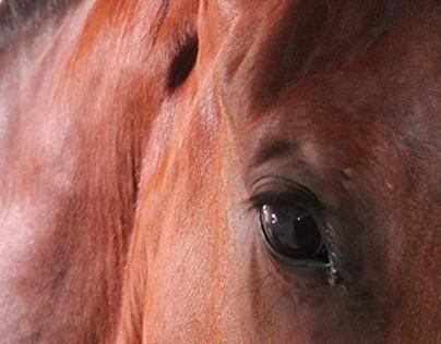 la soledad creativa y los caballos