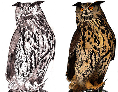 Scientific Illustration II - OWLS
