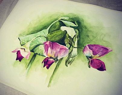 Watercolor :: pea blossoms