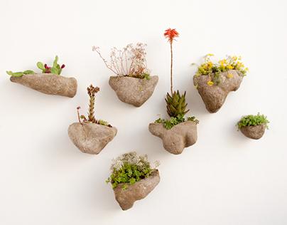 Wedding Plant - Mineral