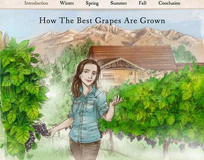 Web Graphic Novel - Piattelli Wine Education