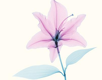 X-rays of Flowers 02