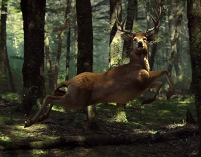 ŻUBR 'THE STAG'