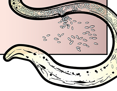Pinworm Life Cycle Plate