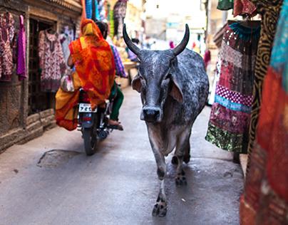 Portraits of India 2014