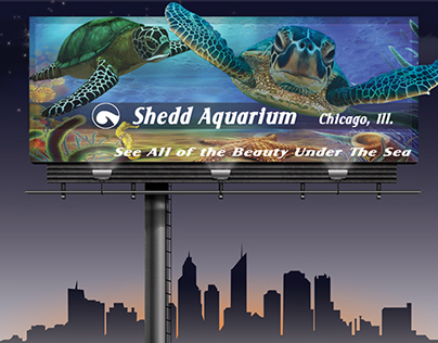 See All the Beauty Under the Sea - Shedd Aquarium