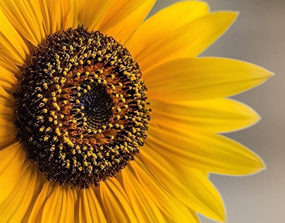 YOU CAN EAT SUNFLOWER !!!!!