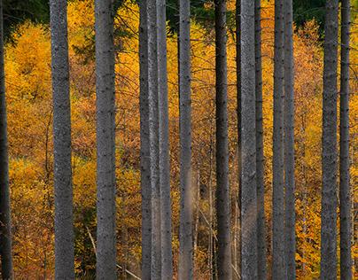 Jesień, Autumn - Poland