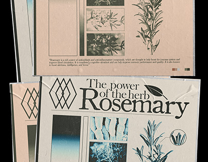 THE POWER OF THE HERB: ROSEMARY