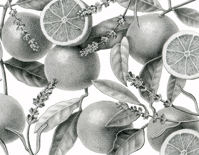 Dasher + Fisher Gin label illustrations