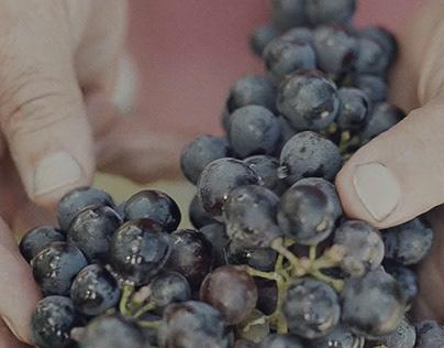 Cantina dei Colli Ripani | Corporate Video