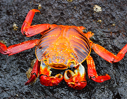 Ecuador's Animals