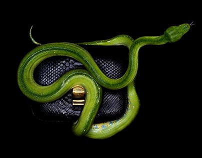 Serpents de Luxe