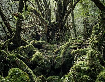 Yakushima - The Forest Spirit