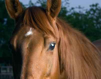 Equine Glamour - Jessie