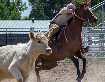 Australian Stock Horse Journal~Colorado Campdraft 2013