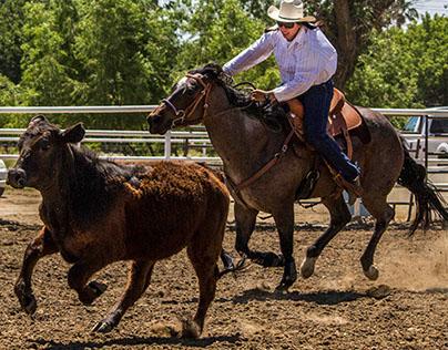 Australian Stock Horse ~ Bakersfield Campdraft