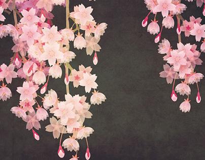 枝垂れ桜 Weeping cherry tree