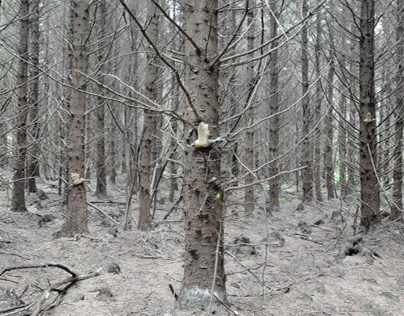 Woodland Part 1