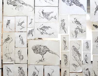 50 series: Distortion of Birds