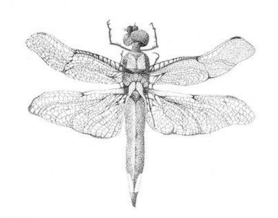 Scientific Drawing/Illustration