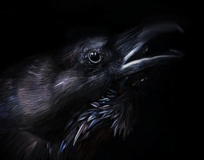 Raven - Drone