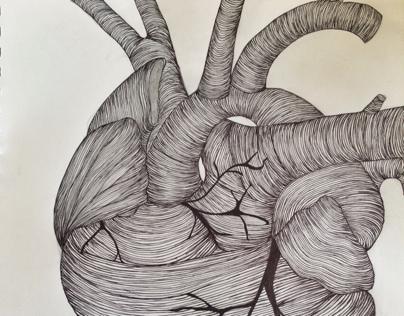 Anatomy illustrations