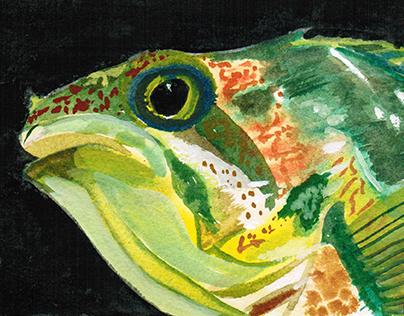"""""""Fish"""" for Zain (Summer 2014)"""