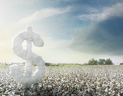 Cotton / Bayer