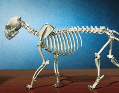 "International House Accademia Britannica - ""Dead cat"""