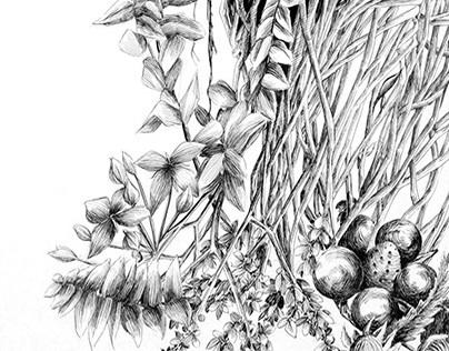 Botanical Illustration Series