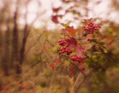 Melancholic autumn day